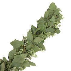 Seeded Eucalyptus Garlands are a great way to decorate for a holiday party or office event. They work best placed on mantles, alters and banisters. Alternatively, they can be used as table centerpieces for backyard weddings! Use them alone or add  other fresh flowers! Garlands are delicately packed...