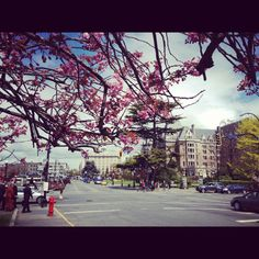 Fairmont Empress at Spring. Victoria BC