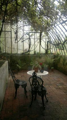 Dream conservatory. So relaxing! I can imagine bird sounds, maybe some water sounds; cool, somewhat shady but still plenty of light. Sigh!!