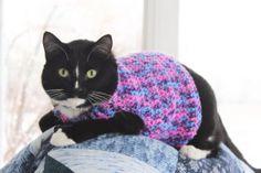 crochet cat sweater! <3
