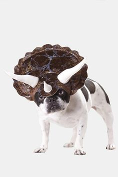 Triceratops Dog Costume!! @Natali Kragh...now your dinosaur dreams can come true (with the help of the Soph)