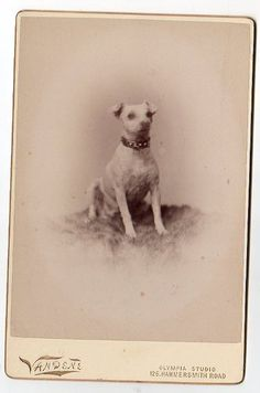 "Original Antique Victorian Cabinet Card Photo ""Terrier Dog"" Pet Animal Vandene   eBay"