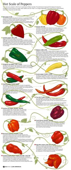 Hot Scale of Peppers #chilli #peppers