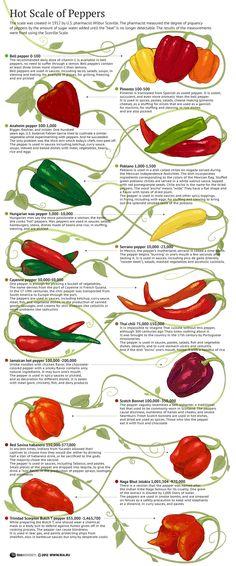 """Hot Scale of Peppers - Schön gemachte Infografik der """"wichtigsten"""" Chili-Sorten..."""