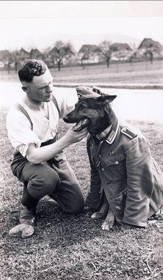 """blutiger-stahl: """"Wehrmacht denn sowas?"""" Ein Schäferhund in Uniform des Herrchen"""