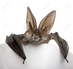 bat - Google Search