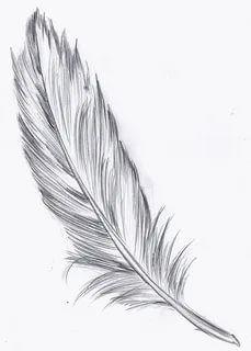перо рисунок карандашом: 3 тыс изображений найдено в Яндекс.Картинках White Feather Tattoos, Feather Tattoo Arm, Feather Drawing, Feather Tattoo Design, Watercolor Feather, Feather Art, Plume Tattoo, Tattoo Homme, Best Cover Up Tattoos