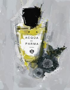 acqua di parma colonia perfume.  illustration design credit, michael sanderson. This is my favorite cologne, and has been for twenty years. Not every day. But special days.