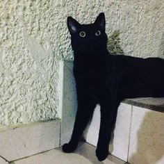 Bajando o descansando?? #animallover #adorable #amigo #bestfriends #gatitolindo #mundogatuno #instamoments #instapic #instaphoto #picoftheday #photooftheday #instacat #kitty #lovecats #cat #catsoninstagram #cats_of_instagram #catoftheday #catstagram #kitty #blackcat