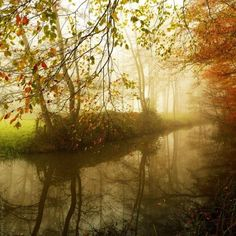 Forrest photography by Nelleke Pieters | Cuded