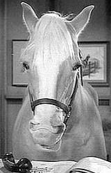 Hello, I'm Mr. Ed