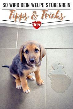 Itchy Dog, Dog Attack, Dog Barking, Dog Feeding, Dog Birthday, Dog Show, Dog Park, Baby Dogs, Border Collie