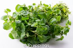 Watercress :: Search by flavors, find similar varieties and discover new uses for ingredients @ preppings.com