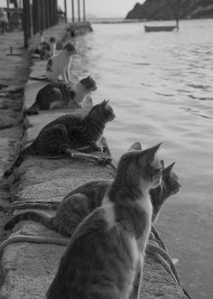 Black and white photo of cats along a stretch of water