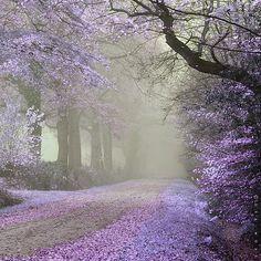 Melancholy:  Road violet and silent t...