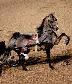25 Best ney pony's images | ney horse, Beautiful horses ...
