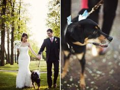 The wedding dog