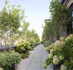 Plant Specialist - hydrangea on rooftop garden