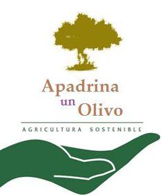 Apadrina Un Olivo, se tu mismo el productor de tu Aceite de Oliva Virgen Extra, de Olivo a tu mesa sin intermediarios