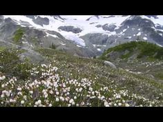 Alpine Tundra Biome Explained - YouTube