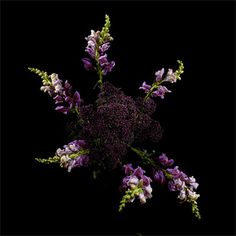 What Color Is It? A Website that TranslatesFlowerworks: Flowers Arranged and Photographed to Look Like Fireworks by Sarah Illenberger