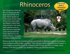 """This pin on the Rhinoceros is an excerpt from the newly released kids eBook on the Amazon Kindle Store entitled """"Zoo Animals"""" -- Volume 1 in the """"All About This & That"""" Picture Book Series for Children by Adrian Robbe. This book has 32 pages of large, beautiful pictures of animals that young boys and girls see when they visit the zoo. Designed primarily for children ages 6 to 12 years old, each picture is accompanied by fun and amazing facts about various zoo animals."""