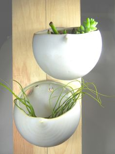 Wall Bubbles!  Great wall planters.