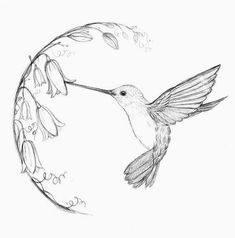 10 Lovely Hummingbird Tattoos For Women - Hummingbird Tattoo Black, Hummingbird Tattoo Watercolor, Hummingbird Illustration, Hummingbird Drawing, Hummingbird House, Bird Drawings, Pencil Drawings, Shoulder Tattoos For Women, Tattoo Shoulder