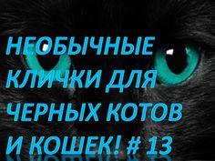 Необычные клички для черных котов и кошек!Смешные животные # 13