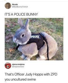 Ideas funny disney memes zootopia for 2019 Humour Disney, Funny Disney Memes, Funny Animal Memes, Stupid Funny Memes, Disney Quotes, Cute Funny Animals, Funny Relatable Memes, Funny Cute, Funny Humor