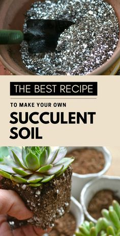 Personally, for me, this is the best soil for succulents, and it's super easy to prepare! In this post, I will share my recipe and show you exactly how to make your own succulent soil. Potting Soil For Succulents, Repotting Succulents, How To Water Succulents, Succulent Landscaping, Growing Succulents, Succulent Gardening, Succulents In Containers, Succulent Care, Cacti And Succulents
