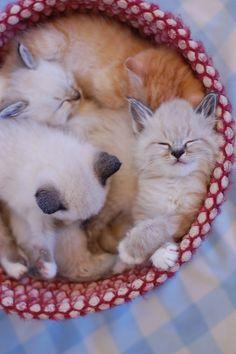 a basket of kitties