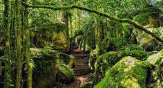 Le labyrinthe de Nébias./ -