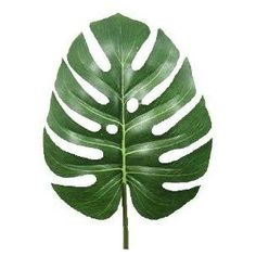 Terrarium Decor Giant Jungle Leaf Split Philo Green: Amazon.co.uk: Kitchen & Home