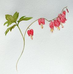 Bleeding Heart Plant Study by on DeviantArt Bleeding Heart Tattoo, Bleeding Heart Plant, Bleeding Hearts, Rose Tattoos, Flower Tattoos, Arm Tattoos, Tatoos, Watercolor Cards, Watercolor Flowers