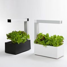 Have fresh aromatics all year at home with Herbie the hydroponic indoor cultivation system.