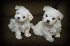 cute pets photo: Cute and Cuter DSC_5729.jpg