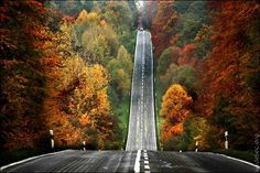 Google Image Result for http://www.therealpublicradio.net/images/road_fall_leaves.jpg