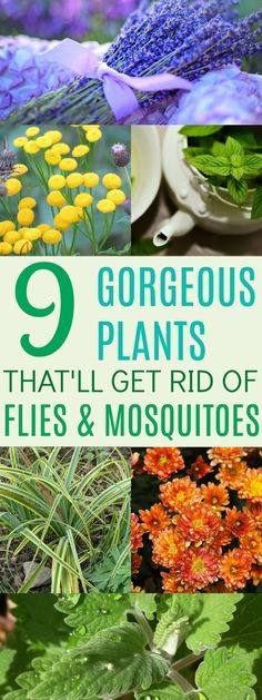 Fighting Plants That'll Save Your Summer Garden These 9 Plants Totally CUTE and effective! I love having multi-purpose plants around my home!These 9 Plants Totally CUTE and effective! I love having multi-purpose plants around my home! Plants That Repel Bugs, Cool Plants, Outdoor Plants, Outdoor Gardens, Small Gardens, Organic Gardening, Gardening Tips, Indoor Gardening, Vegetable Gardening