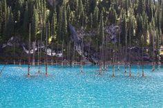 The Sunken Forest of Lake Kaindy, Kazakhstan #Lake #Kaindy #Kazakhstan…