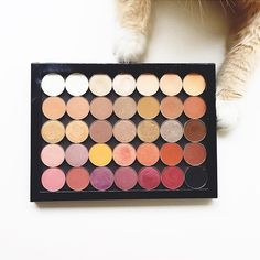 This lil kitty can't get enough of our cruelty-free eyeshadows! Photo by: @jskbeauty! We love seeing your makeup enthused furbabies.