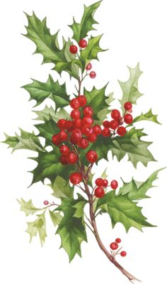 Holly and Berries - Christmas - tubes noel / Victorian - Site not in English but lots of goodies Christmas Flowers, Noel Christmas, Winter Christmas, All Things Christmas, Christmas Crafts, Christmas Decorations, Christmas Ornaments, Holiday Decor, Christmas Graphics