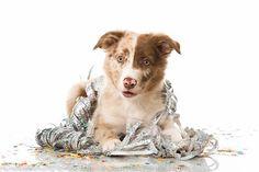 Silvester mit dem Hund – Tipps und Tricks