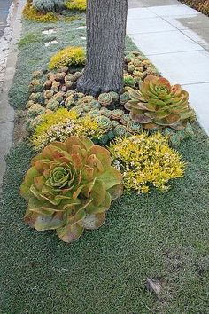 Drought tolerant parking strip | Backyards Click