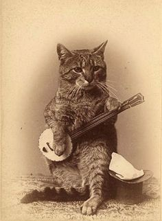 Cat with banjo (and the inpiration behind Kellie Pickler's ASPCA cat sweater!)