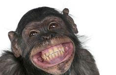Quebles Q-Cards, cool monkey