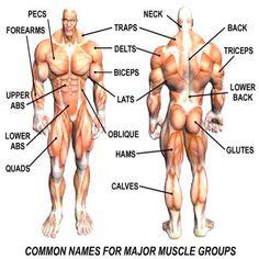 Znalezione obrazy dla zapytania common names for muscle groups