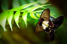 Colours In The Air - #butterflies #mariposas