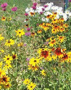 Google Image Result for http://www.theflowerexpert.com/media/images/aboutflowers/wildflowers/wildflowerseed/wild-flower-garden.jpg
