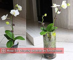How-To: Display Orchids in Terrariums